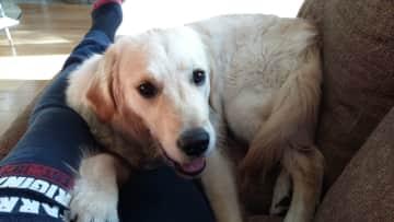Juno...still a Puppy