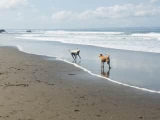 Mambo and Benny at Canggu Beach, Bali