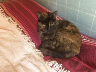 Gina, is our old girl. She came with us from the UK and is approximately 16 years old. Gina loves attention, that when she is not asleep.