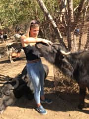 Courtney showing some love to the waterbuffalo.