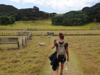 I might be one of the few people that still get excited in NZ when crossing a sheep