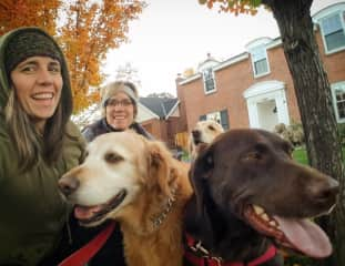 Kelsey andher 3 big dogs on a walk