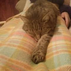 Gato having a snooze
