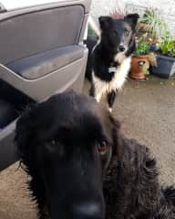 Benny & Freddie
