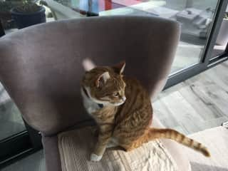 Tigger on his chair