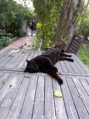 Nigel relaxing in the front garden
