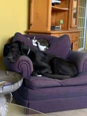 Rolo & Chanel - a 2 dogs 2 cats sit Calonge,  Girona Spain,  Aug 2020  We repeated in Dec 2020