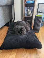 This pillow used to be Junior's, but now it's hers