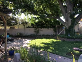 The back yard refugia. A cool shady spot to spend your summers days.