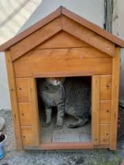 Dog house? ppffffft.