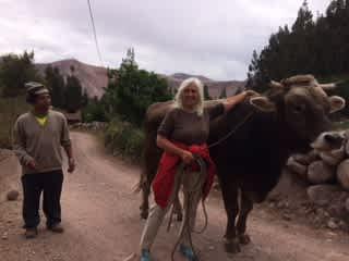 Peru bullwalking 2017