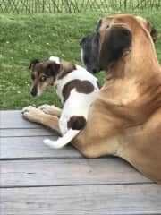 Our two babies