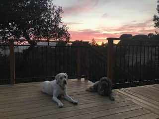 Hanna taking in the sunset with our first pet-sit buddy, Cricket!♥️ July 2021