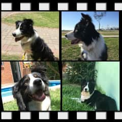 She is Pupi!!! my pet in Argentina :)