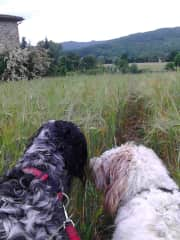 Gassi and Mana' on their morning walk