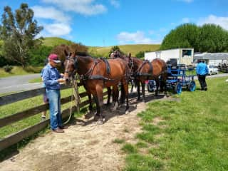 Working with horses during house sit