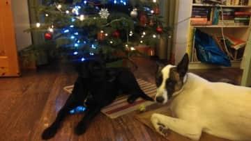 Carafa and Magnum at Christmas