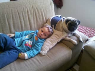Marvin and Jack the Pug