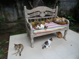 Villa Kitty Bali - a home for rescued kitties