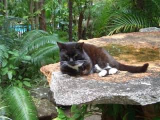 Tina our  cat