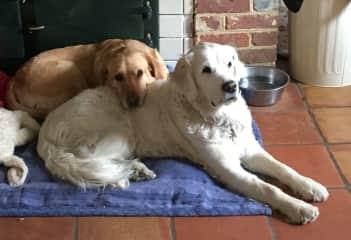 Roxy and Georgie, Kent, UK.