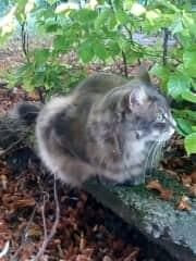 my favourite cat