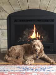 Living room fireplace (complete with dog :)