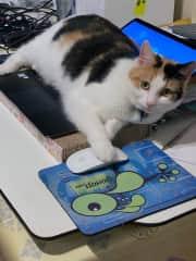 Belle on her laptop