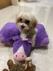She loves to hoard her stuffed toys. Playing fetch is not a talent...