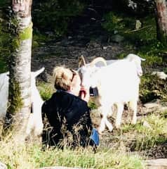 Cashmere Goats in Bergen, Norway.