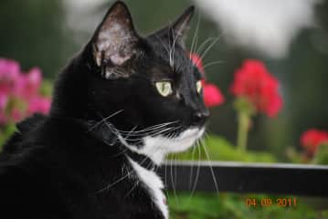 My companion Mousy who now is in cat heaven