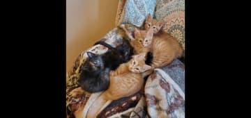 My latest litter of foster kittens. So cute!