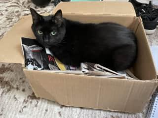 She never met a box she didn't like