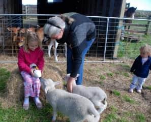 Feeding time on the farm