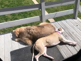 Freya loves her brother and chilling in the sun.