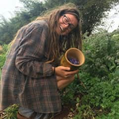 Me harvesting Borage for my edible flower business.