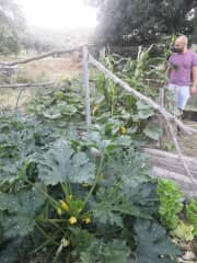 We did a housesit for 5 months in the south of Spain (to bridge Covid). We were free to start up the garden. When we left they were able to feed the whole village :p (#50tomatoplants)