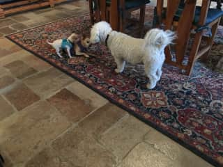 Toto with two visiting friends