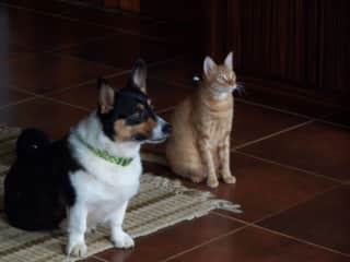 Our pets are such a big part of our lives!  (Monty and Alex)