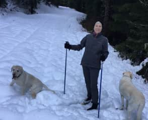 Marlene XC Skiing with our own dogs in Oregon's Cascades
