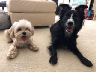 My grand-pups