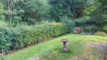 Some of the front garden