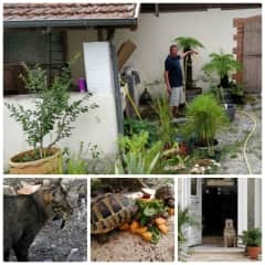 THS-S.W.France-British expats-15 year old deaf Border Terrier, 2 cats, 2 tortoises- 2 weeks August/September 2019