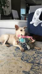 She's a simple dog: loves her toys!