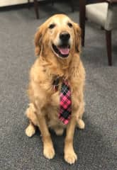 """Cooper wears his tie when he's """"working"""" at the Denver Police Department, spreading love and comfort to everyone there."""