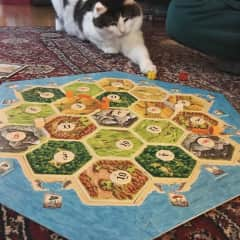 Kona also enjoys playing board games with us!