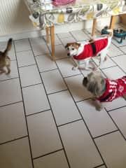 Xmas family dogs
