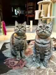 My Favourite twins!! ❤️