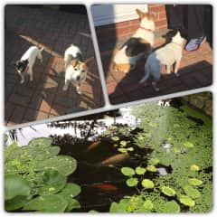 In Yorkshire with pooches and fish