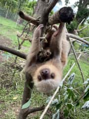 Just hanging out with my sloth buddy